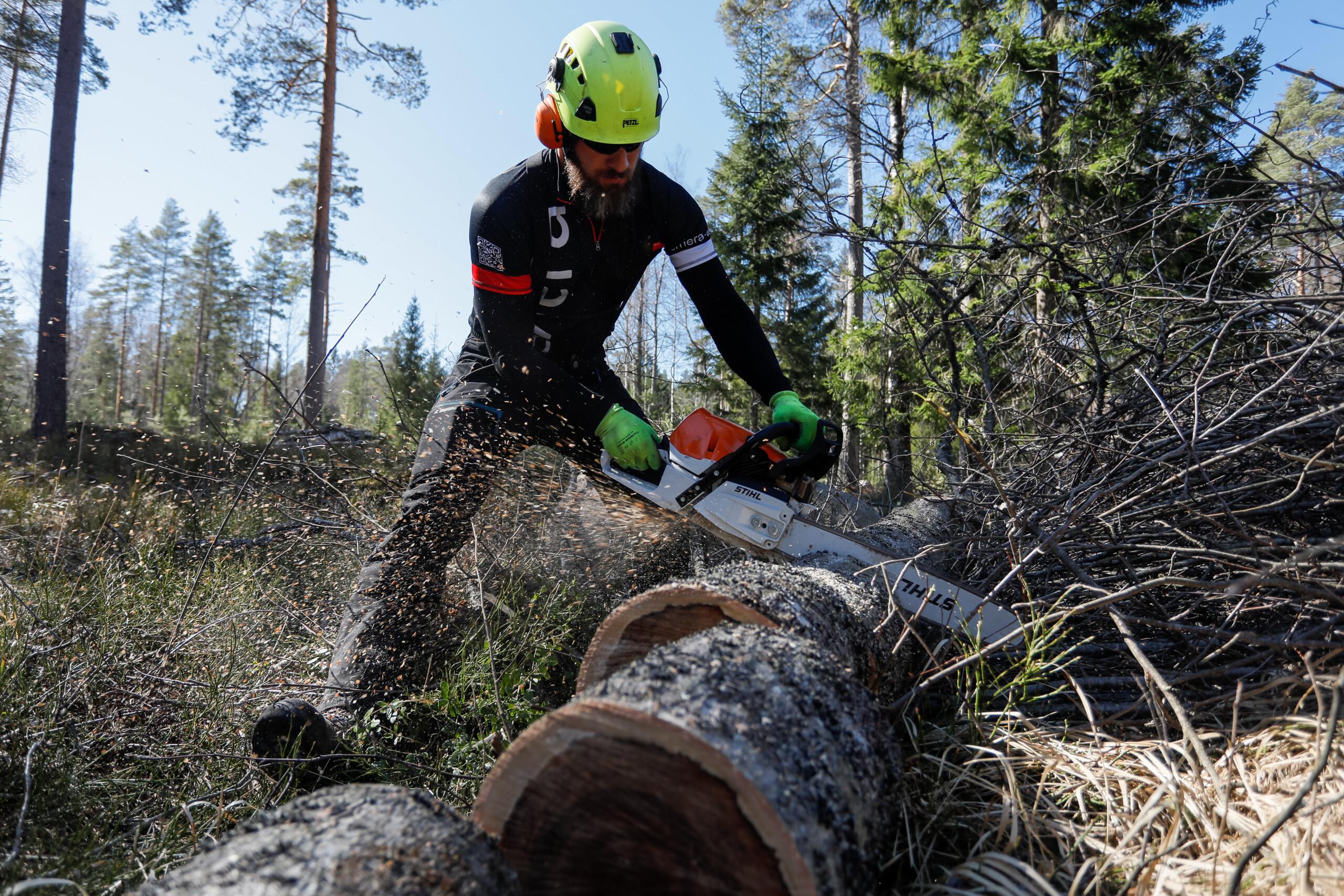 Удаление молодой поросли деревьев