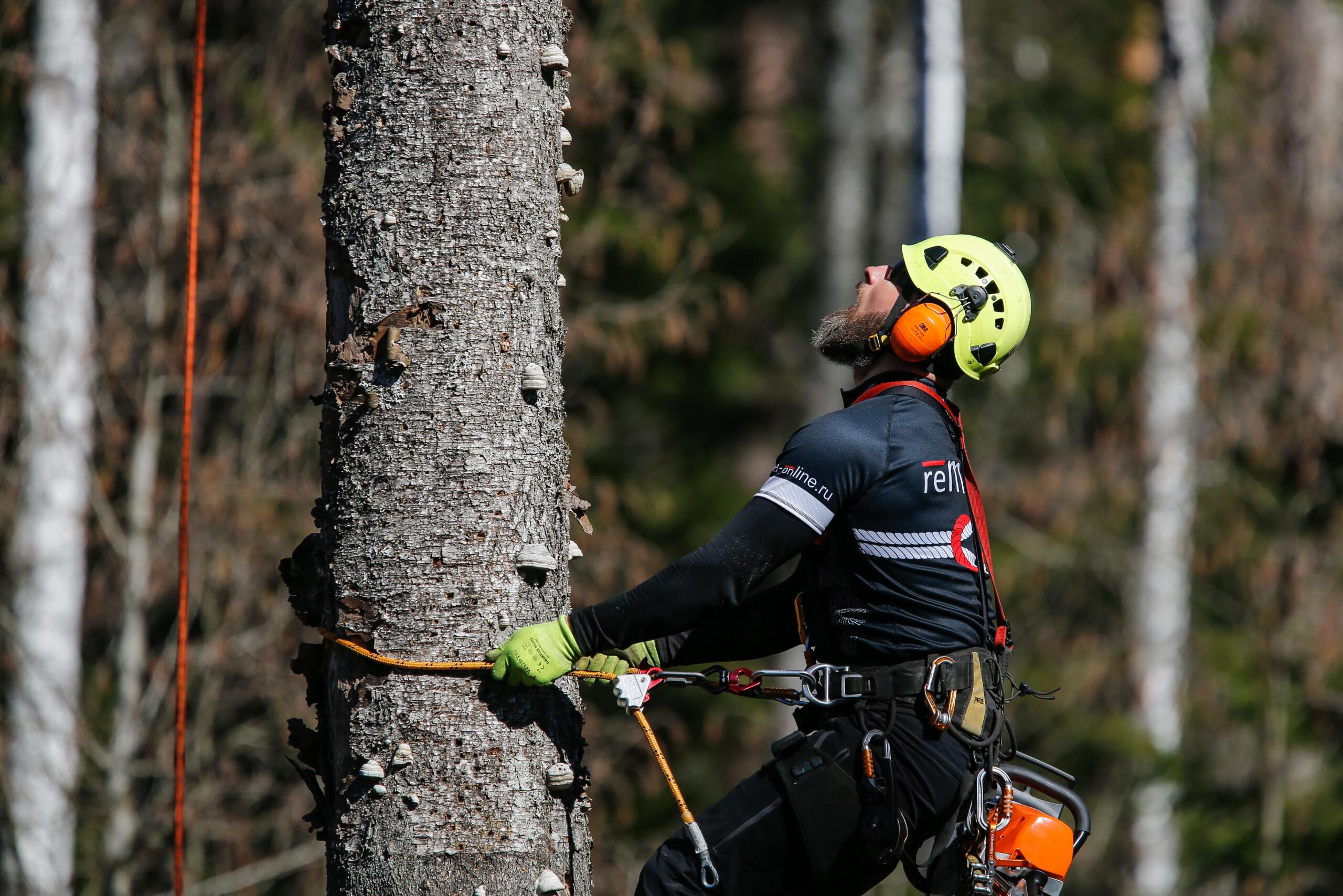 Какие деревья можно пилить без разрешения